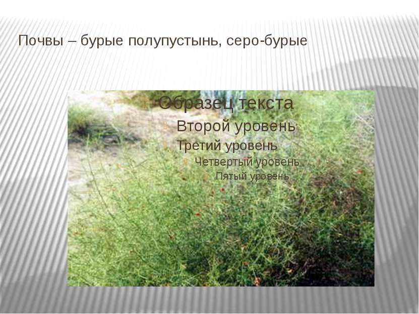 Почвы – бурые полупустынь, серо-бурые