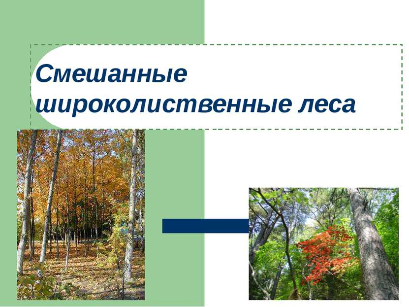 Смешанные широколиственные леса