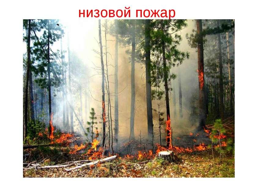 низовой пожар