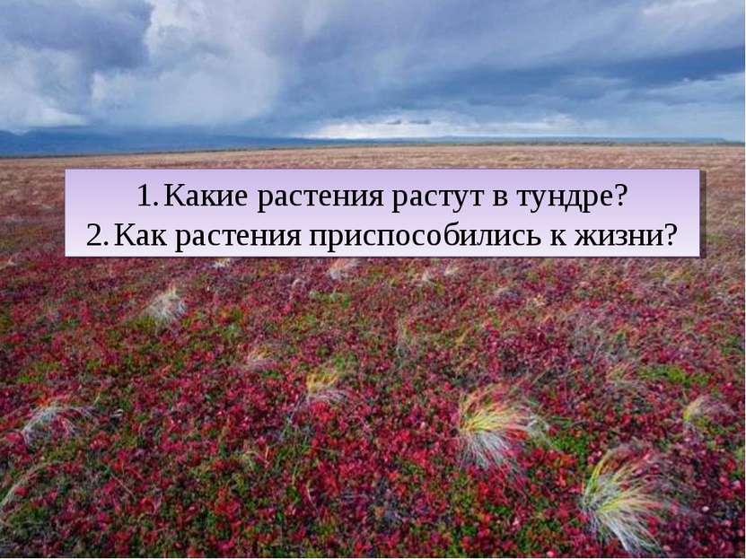 Какие растения растут в тундре? Как растения приспособились к жизни?