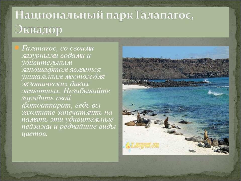 Галапагос, со своими лазурными водами и удивительным ландшафтом является уник...