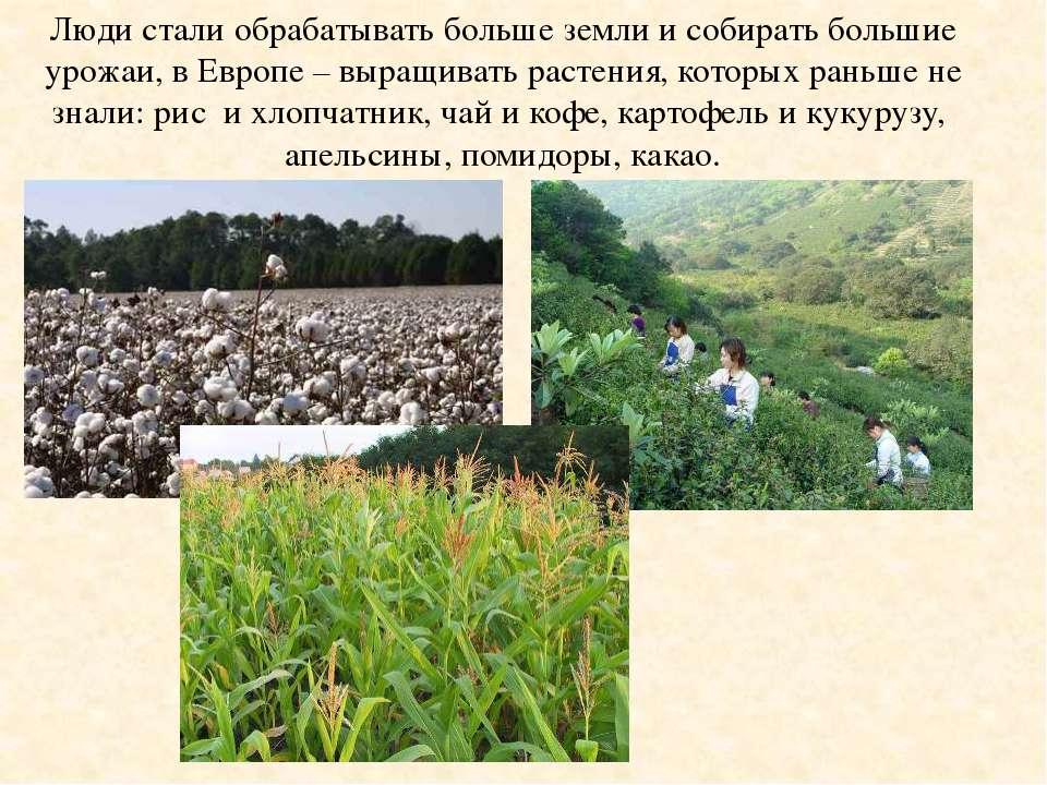 Люди стали обрабатывать больше земли и собирать большие урожаи, в Европе – вы...