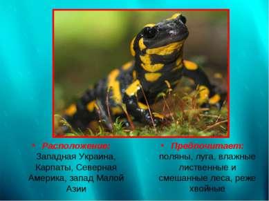 Расположение: Западная Украина, Карпаты, Северная Америка, запад Малой Азии П...