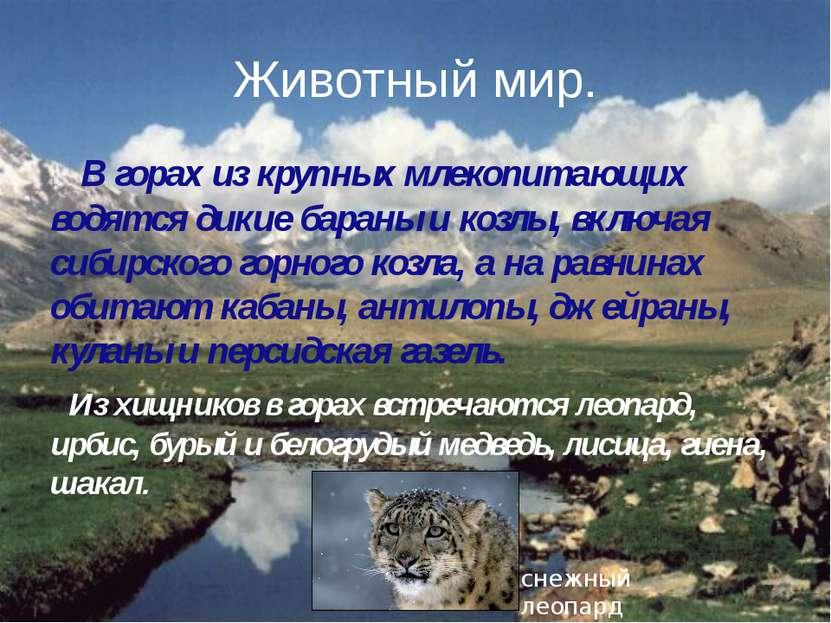 Животный мир. В горах из крупных млекопитающих водятся дикие бараны и козлы, ...