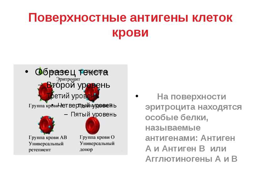 Поверхностные антигены клеток крови На поверхности эритроцита находятся особы...