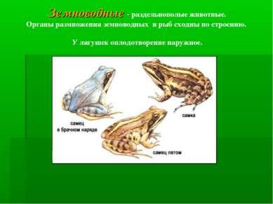 Земноводные - раздельнополые животные. Органы размножения земноводных и рыб с...