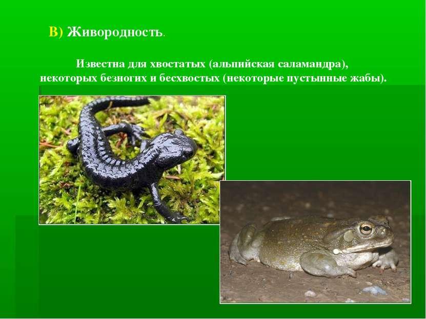 В) Живородность. Известна для хвостатых (альпийская саламандра), некоторых бе...
