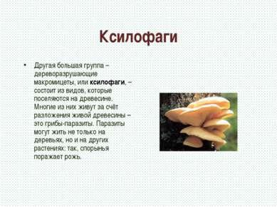 Ксилофаги Другая большая группа – дереворазрушающие макромицеты, или ксилофаг...