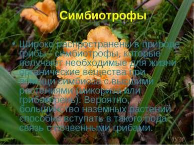 Симбиотрофы Широко распространены в природе грибы - симбиотрофы, которые полу...