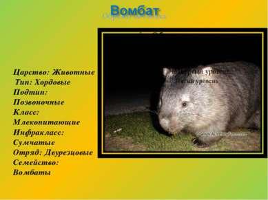 Царство: Животные Тип: Хордовые Подтип: Позвоночные Класс: Млекопитающие Инфр...