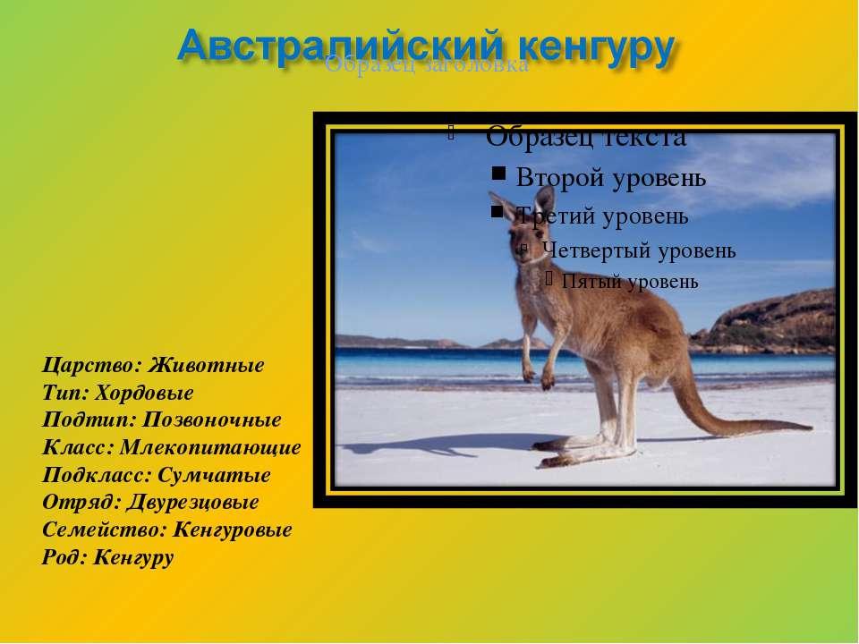 Царство: Животные Тип: Хордовые Подтип: Позвоночные Класс: Млекопитающие Подк...