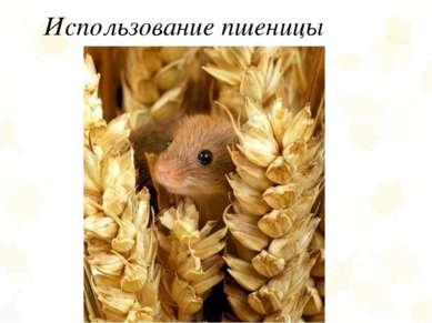 Использование пшеницы