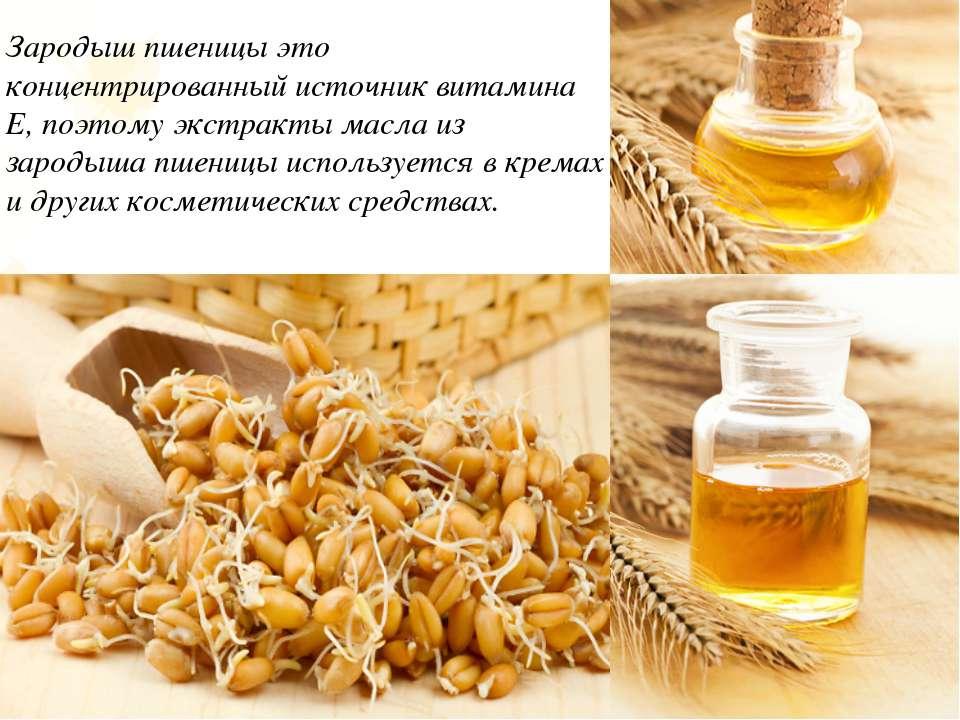 Зародыш пшеницы это концентрированный источник витамина Е, поэтому экстракты ...