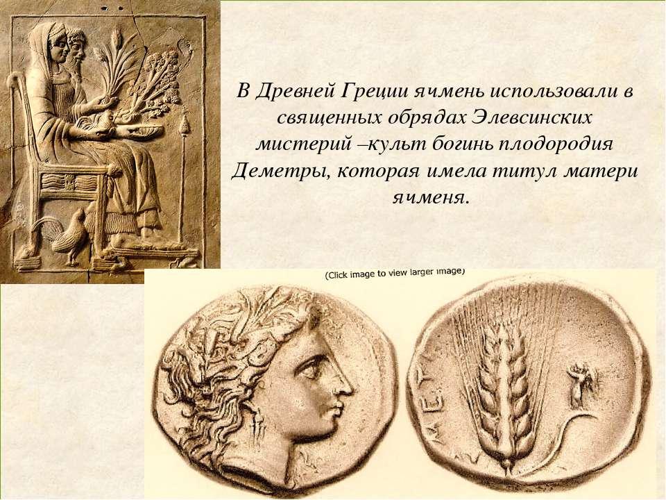 В Древней Греции ячмень использовали в священных обрядах Элевсинских мистерий...