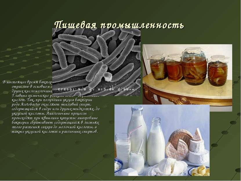 Пищевая промышленность В настоящее время бактерии применяются этой отраслью в...