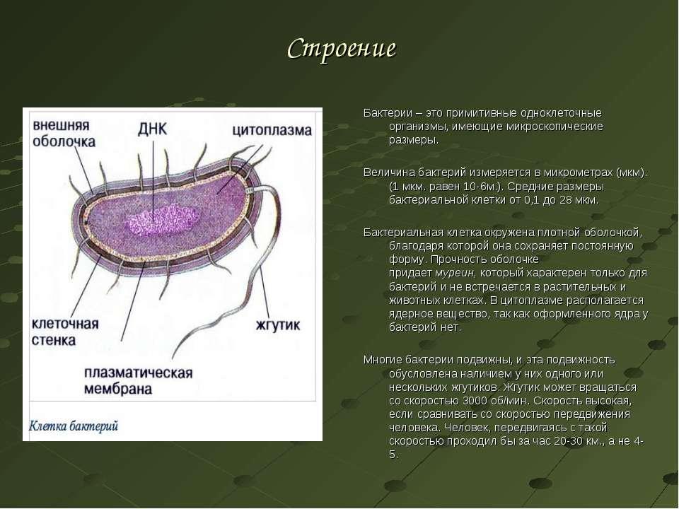 Строение Бактерии – это примитивные одноклеточные организмы, имеющие микроско...