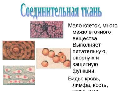 Мало клеток, много межклеточного вещества. Выполняет питательную, опорную и з...