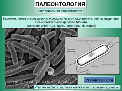 ПАЛЕОНТОЛОГИЯ Бактериальная палеонтология Бактерии, ранее считавшиеся микроск...