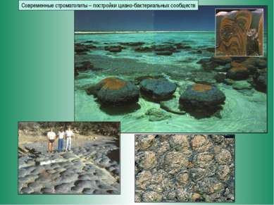Современные строматолиты – постройки циано-бактериальных сообществ