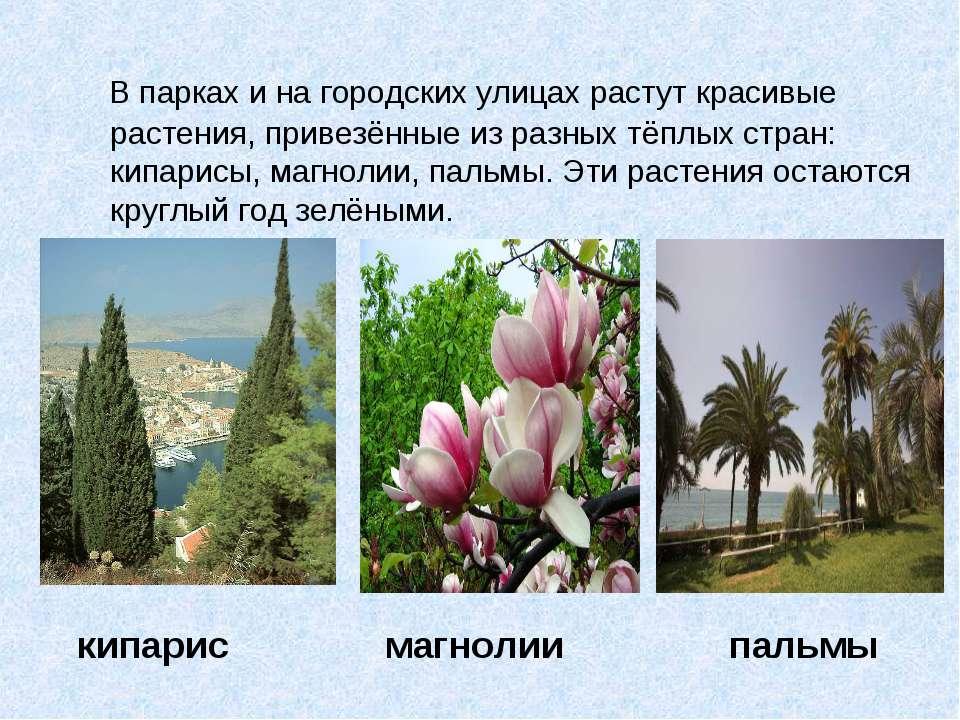В парках и на городских улицах растут красивые растения, привезённые из разны...