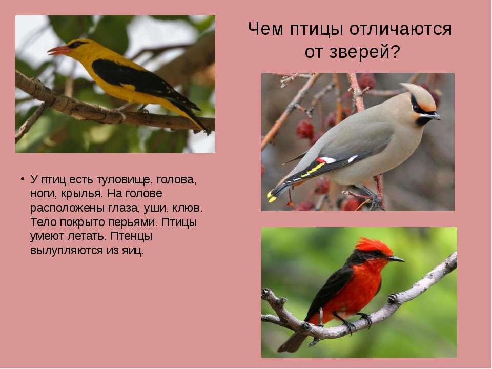 Чем птицы отличаются от зверей? У птиц есть туловище, голова, ноги, крылья. Н...