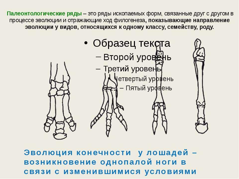 Палеонтологические ряды – это ряды ископаемых форм, связанные друг с другом в...