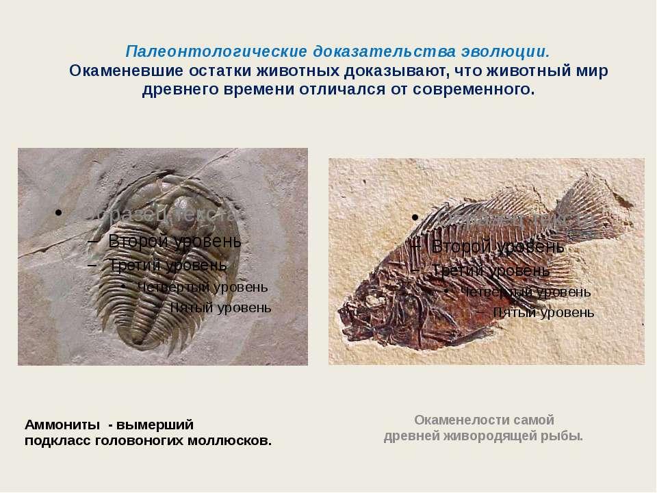 Палеонтологические доказательства эволюции. Окаменевшие остатки животных дока...