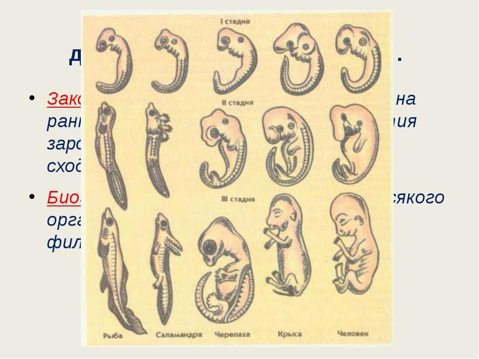 Эмбриологические доказательства эволюции. Закон зародышевого сходства (К.Бэр)...
