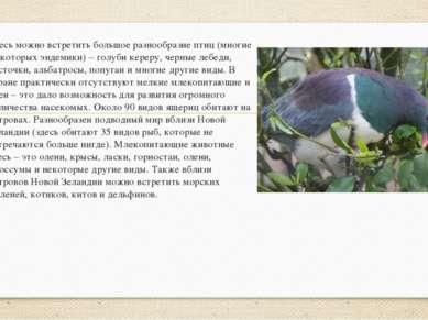 Здесь можно встретить большое разнообразие птиц (многие из которых эндемики) ...