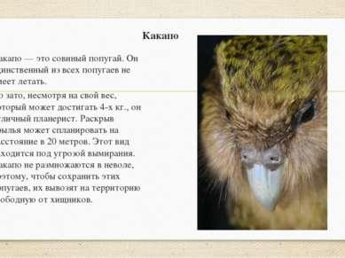 Какапо Какапо — это совиный попугай. Он единственный из всех попугаев не умее...
