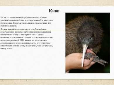 Киви Ки ви — единственный род бескилевых птиц в одноимённом семействе и отряд...