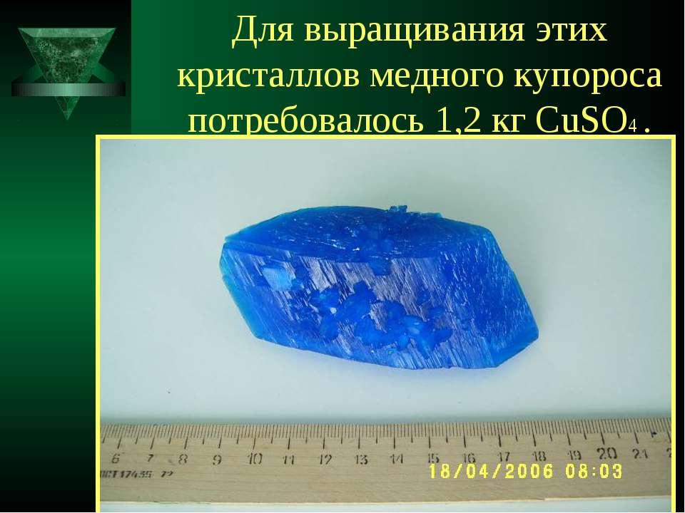 Для выращивания этих кристаллов медного купороса потребовалось 1,2 кг CuSO4 .
