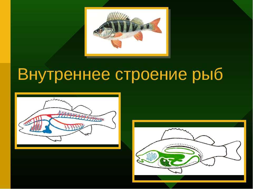 Внутреннее строение рыб