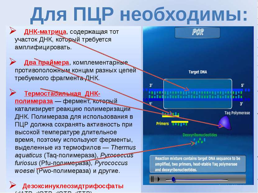 Для ПЦР необходимы: ДНК-матрица, содержащая тот участок ДНК, который требуетс...