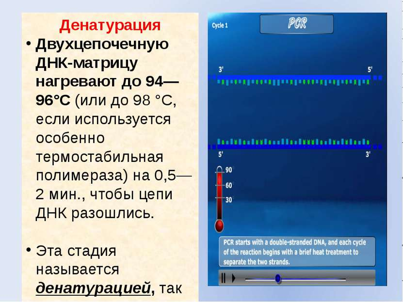 Денатурация Двухцепочечную ДНК-матрицу нагревают до 94—96°C (или до 98°C, ес...
