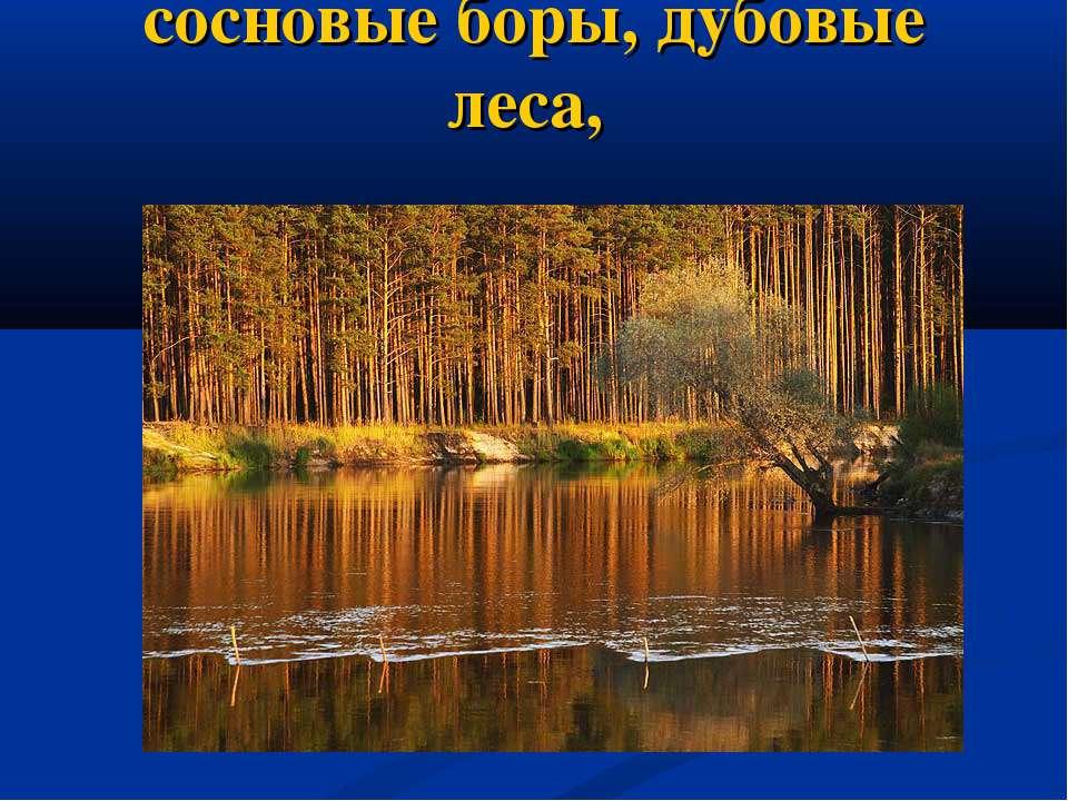 сосновые боры, дубовые леса,