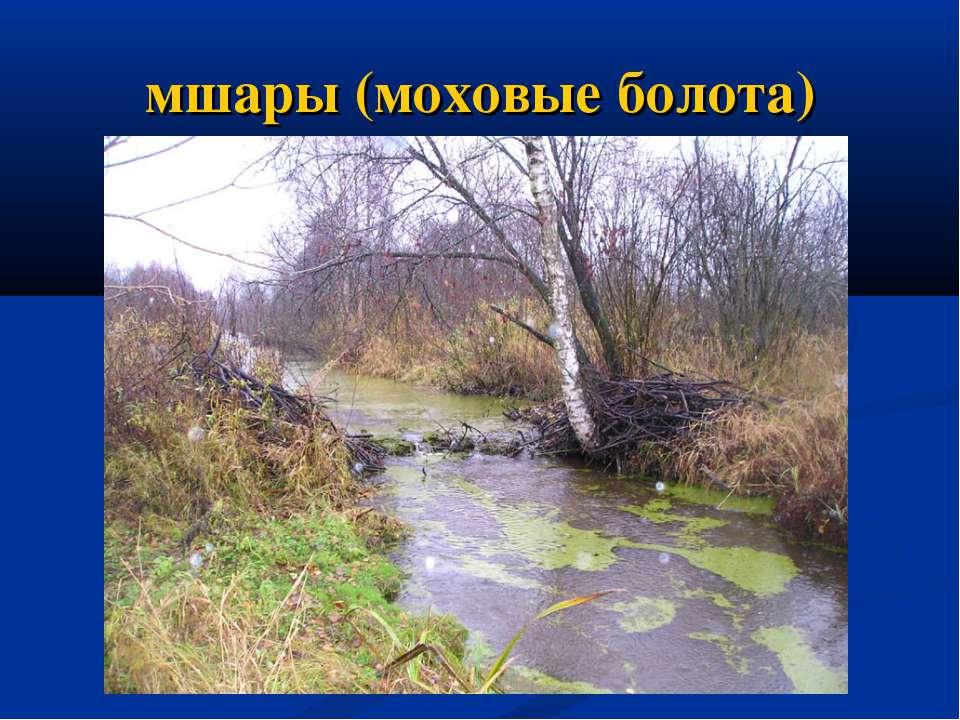 мшары (моховые болота)