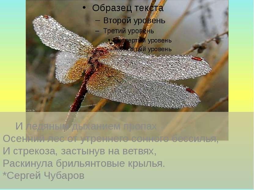 И ледяным дыханием пропах Осенний лес от утреннего сонного бессилья, И стреко...