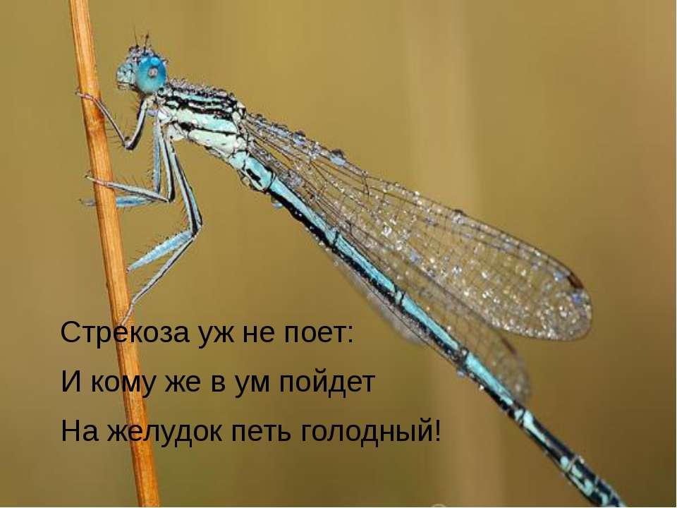 Стрекоза уж не поет: И кому же в ум пойдет На желудок петь голодный!