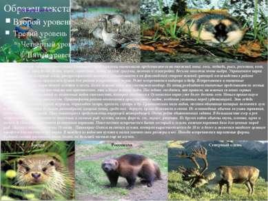 Млекопитающиенационального парка Паанаярвипредставлены типичными представи...