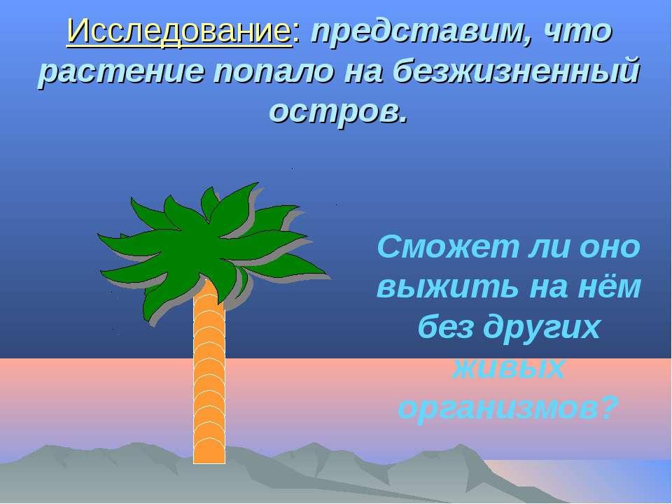 Исследование: представим, что растение попало на безжизненный остров. Сможет ...