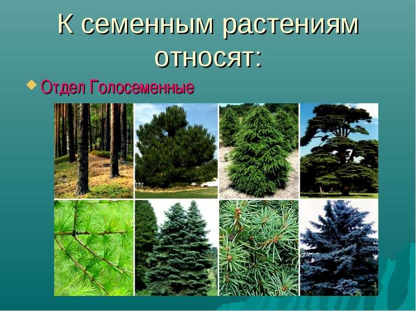 К семенным растениям относят: Отдел Голосеменные