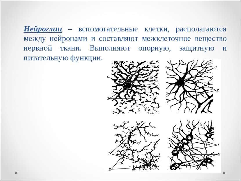 Нейроглии – вспомогательные клетки, располагаются между нейронами и составляю...