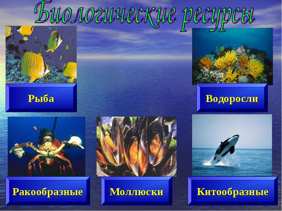 Рыба Ракообразные Моллюски Водоросли Китообразные