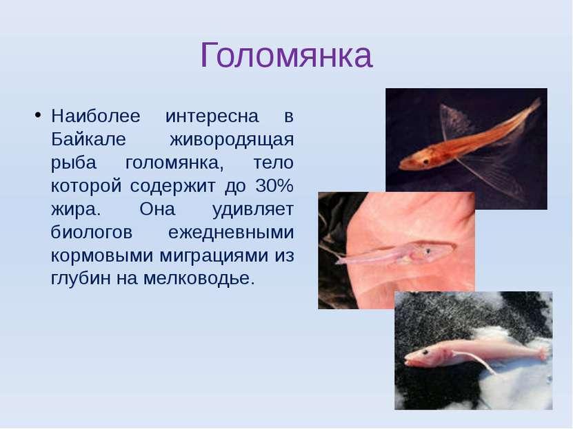 Голомянка Наиболее интересна в Байкале живородящая рыба голомянка, тело котор...