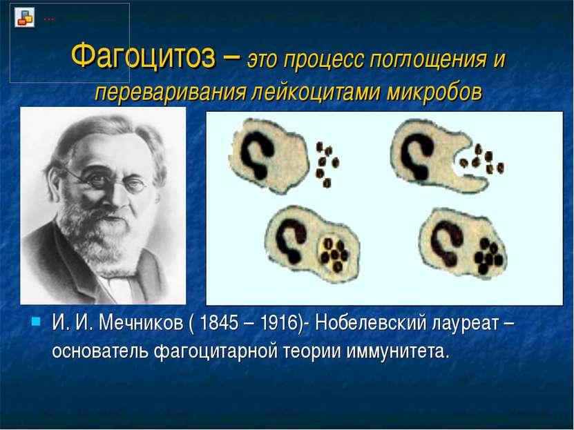 Фагоцитоз – это процесс поглощения и переваривания лейкоцитами микробов И. И....