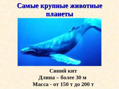 Самые крупные животные планеты Синий кит Длина – более 30 м Масса - от 150 т ...