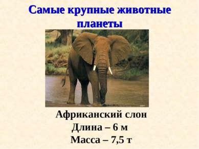 Самые крупные животные планеты Африканский слон Длина – 6 м Масса – 7,5 т