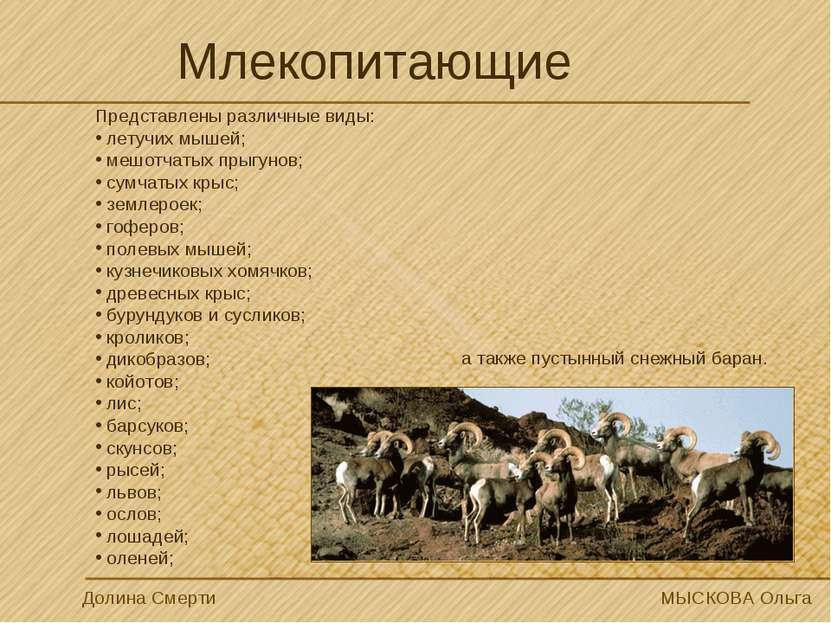 Млекопитающие Долина Смерти МЫСКОВА Ольга Представлены различные виды: летучи...