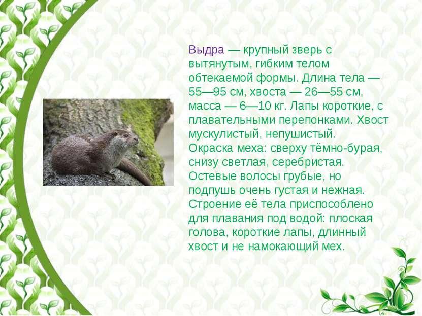 Выдра— крупный зверь с вытянутым, гибким телом обтекаемой формы. Длина тела...